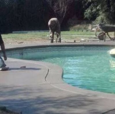 this is a picture of pool deck contractor in rocklin, ca